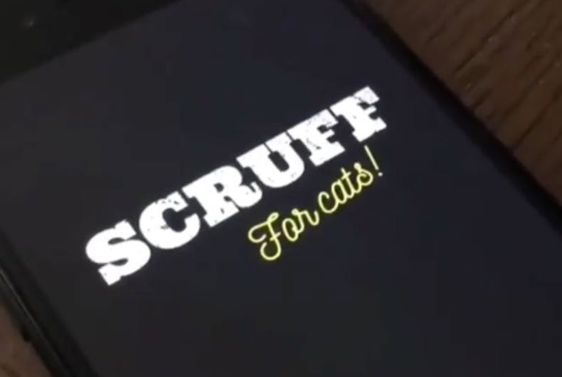 Not just for bears and otters any more: Scruff for cats is here!