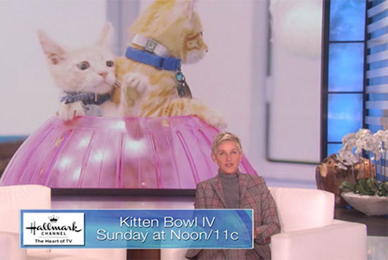 Ellen kicks off Kitten Bowl IV, the big game for the rest of us