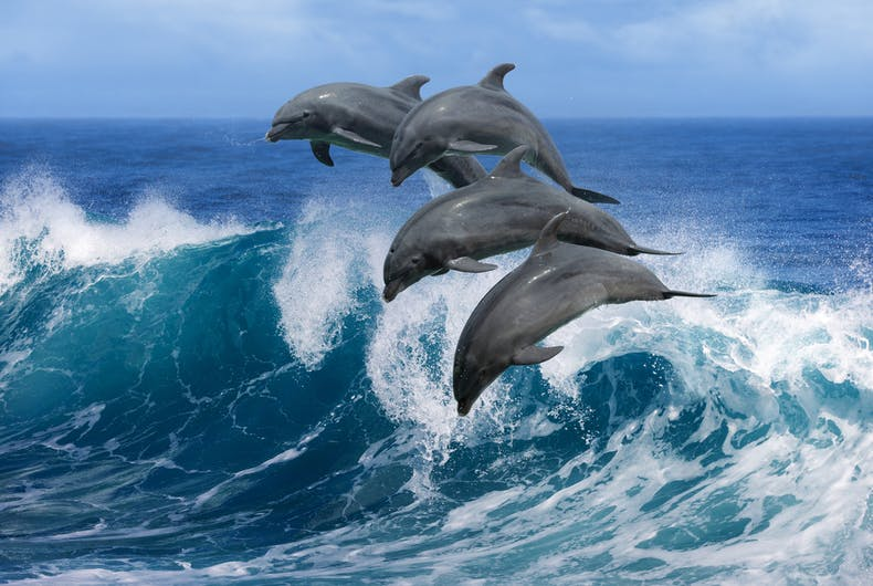 A pod of bisexual dolphins are hanging out near Australia & no one knows why