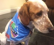 This dog almost got kicked for wearing a marriage equality bandana