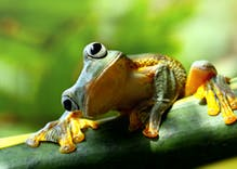 Are the majority of frogs in the United States now gay thanks to chemicals in water?