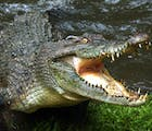 This politician won't spend time on marriage equality while crocodiles are attacking people