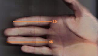 Can your finger length predict if you're gay or straight?