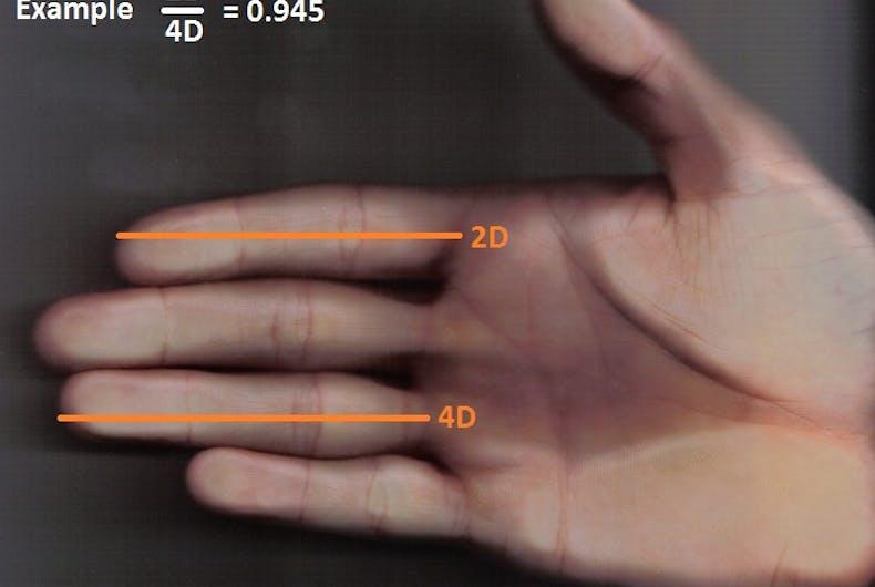 2d-4d-ratio