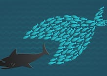 Trump wants to divide us. But like fish, we need to unite against oppression.