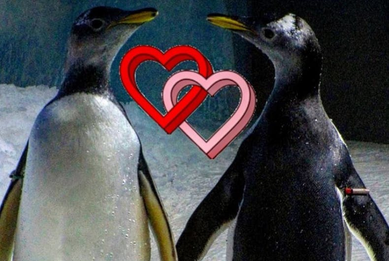 Two penguins with hearts
