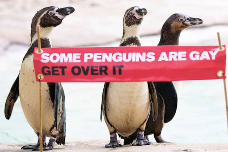 gay penguins, ZSL London Zoo, Pride, Some penguins are gay, get over it
